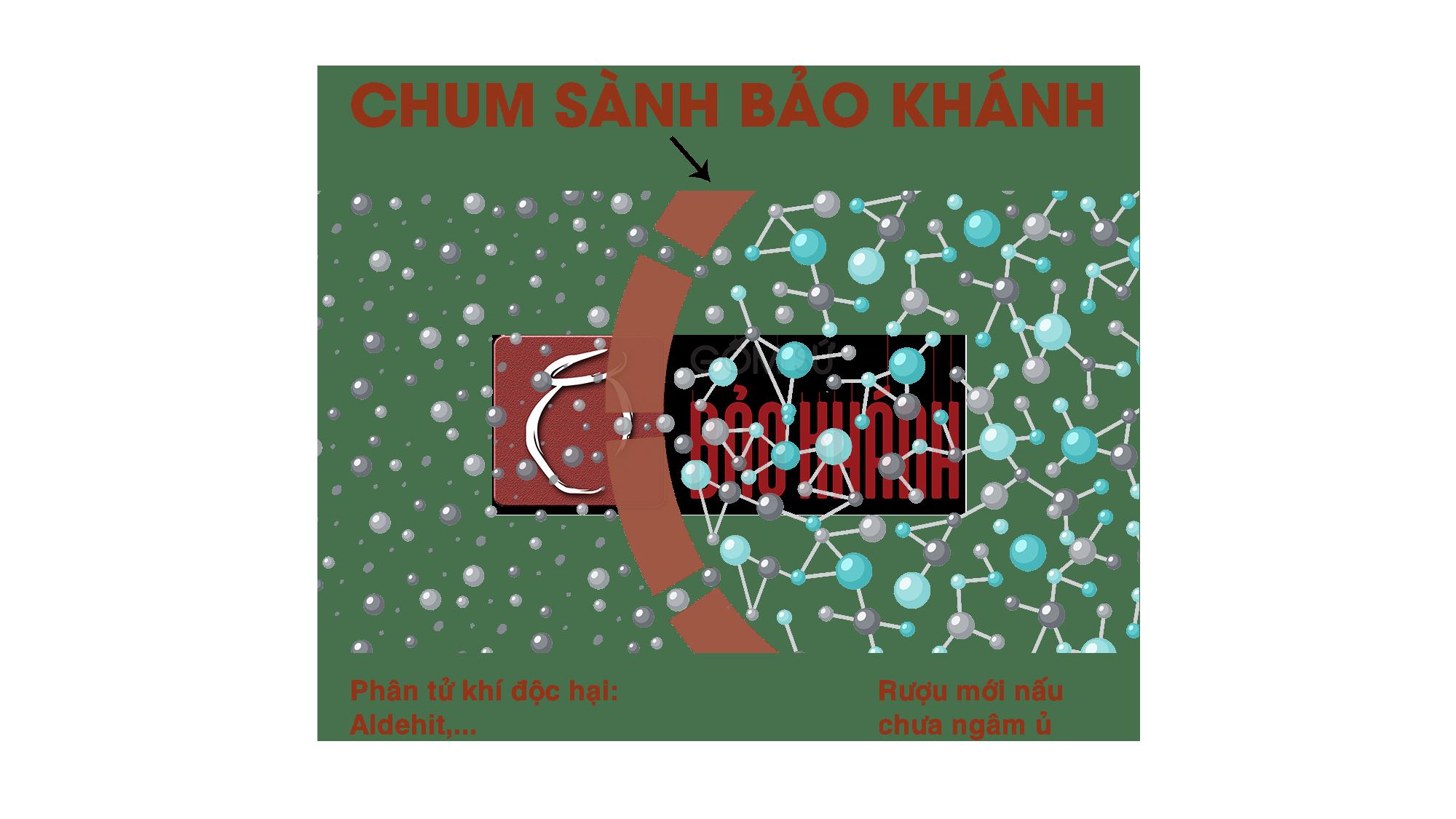 Quá trình thẩm thấu Aldehit qua thành Chum Sành Bảo Khánh